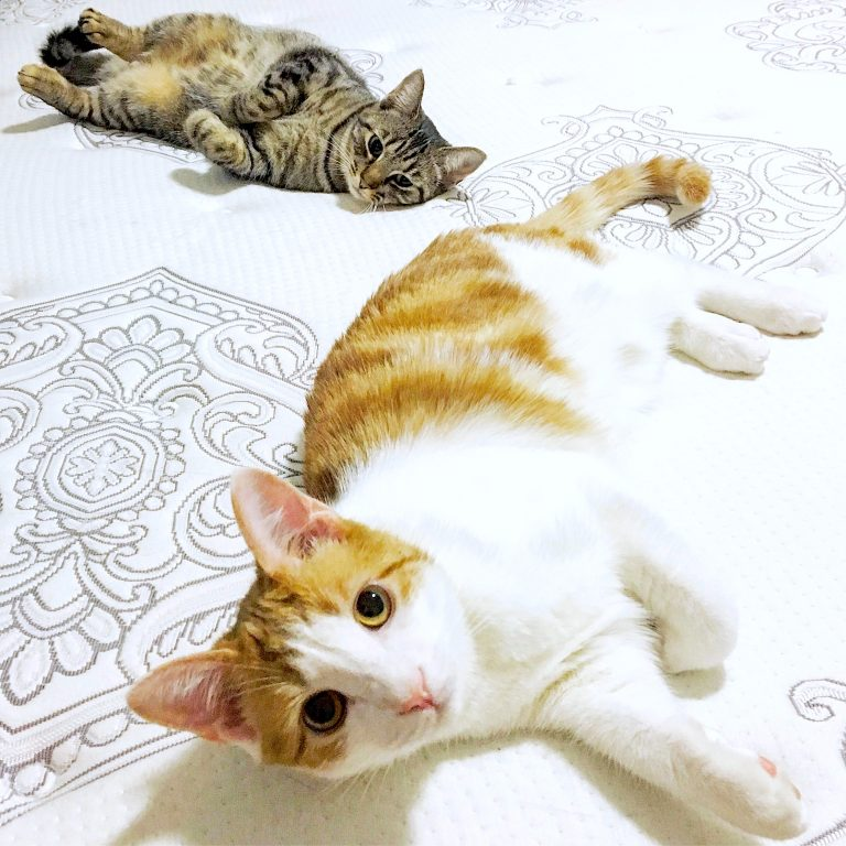 Read more about the article Life Lessons From Our Cats